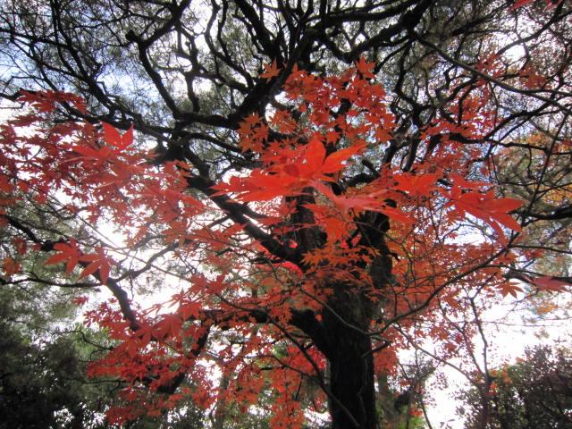 京都旅行09年11月24~27日 139
