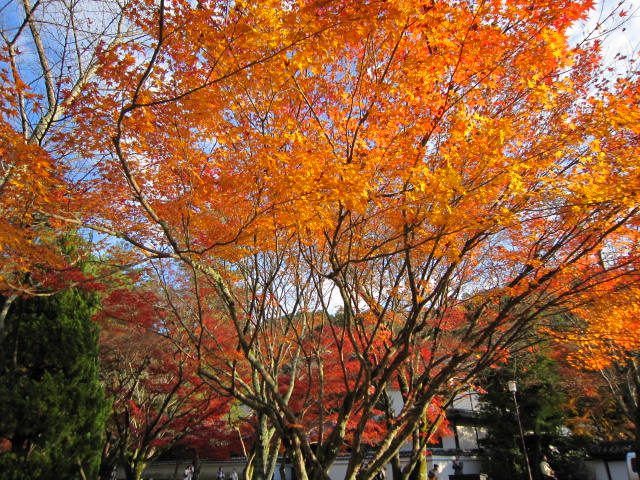 京都旅行09年11月24~27日 203