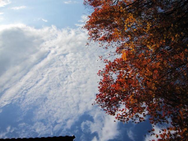 京都旅行09年11月24~27日 204