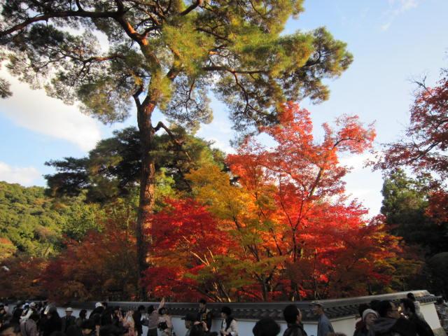 京都旅行09年11月24~27日 246