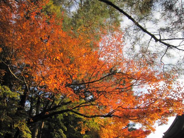 京都旅行09年11月24~27日 237