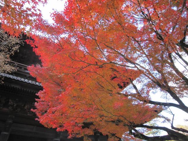 京都旅行09年11月24~27日 208