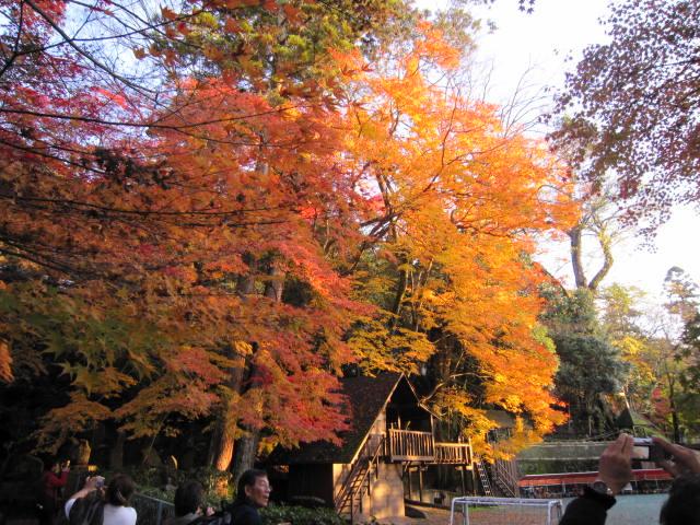 京都旅行09年11月24~27日 265
