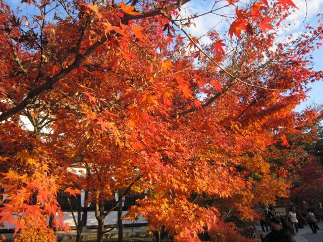 京都旅行09年11月24~27日 254