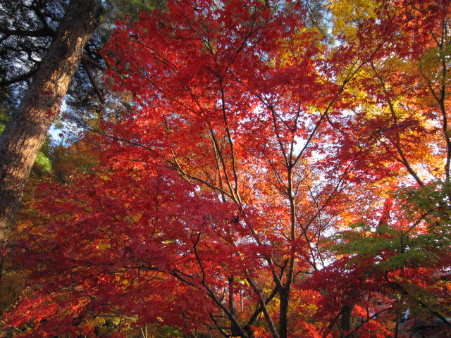 京都旅行09年11月24~27日 249