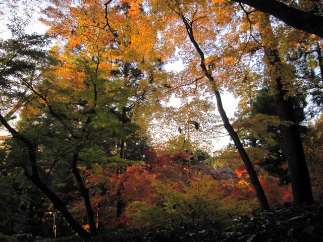 京都旅行09年11月24~27日 264