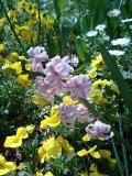 flower-p.jpg