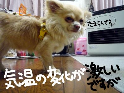 P1030254_convert_20090226172626.jpg