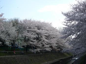 善福寺川2