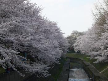 善福寺川3