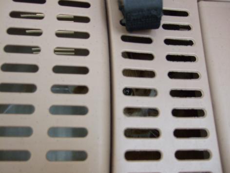 20100610+003_convert_20100611084910.jpg