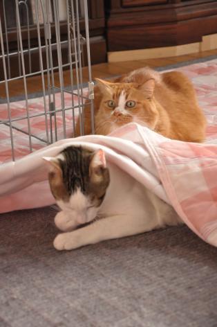 DSC_0034_convert_20100527112851.jpg