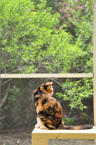 DSC_0134_convert_20100516134430.jpg