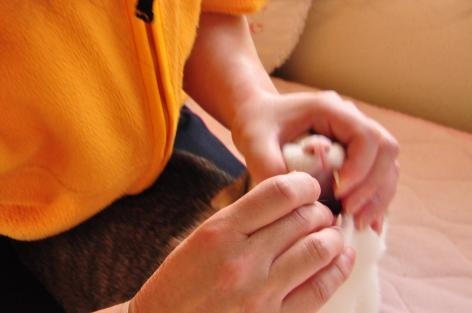 DSC_0364_convert_20100516092548.jpg
