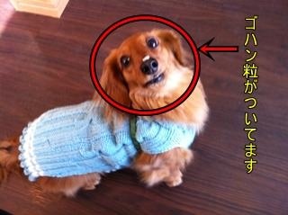 IMG_0093-reごはんつぶ