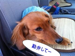 IMG_0098-re勘弁