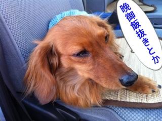 IMG_0097-re晩御飯抜き