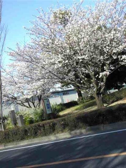 09328桜