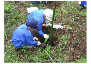 09515植樹
