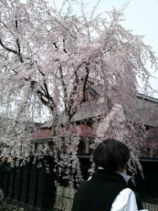 09420角館桜