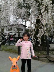 09420角館桜1
