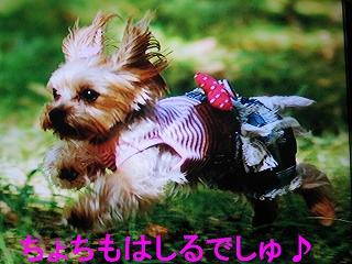 IMG_1283_sh01.jpg
