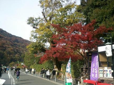 2011/11/27 嵐山