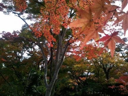 2011/11/27 常寂光院