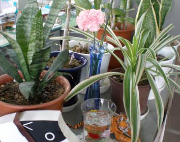 事務所内植物たち2