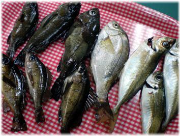 魚を並べて