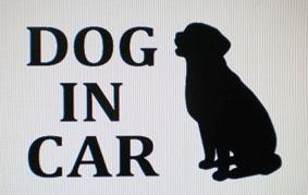 DOG IN CAR ラブラドール