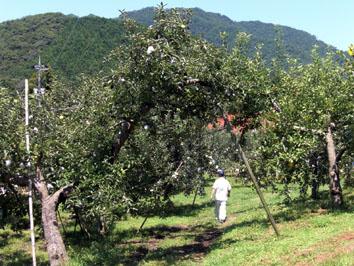 りんご園 1