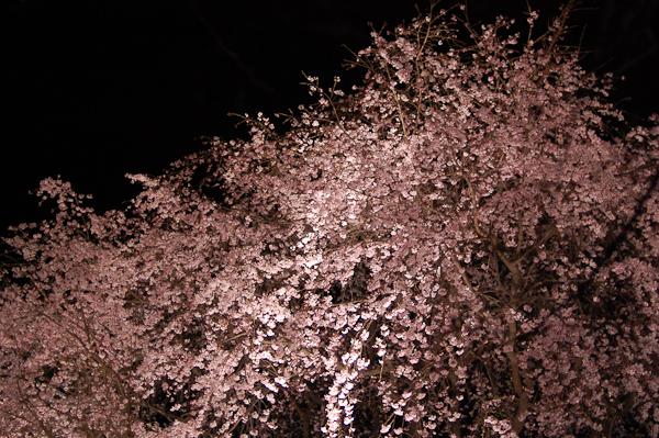 20090326_10.jpg