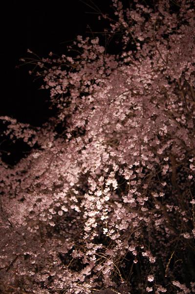 20090326_6.jpg