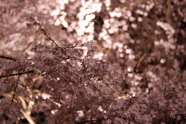 20090326_8.jpg