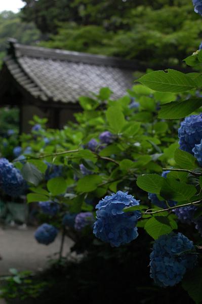 20090628_10.jpg