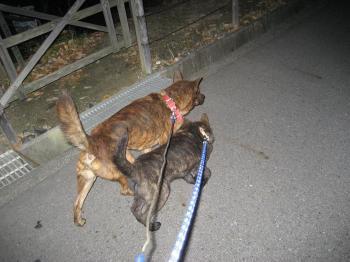 ブログ リラ 夜の散歩2 002