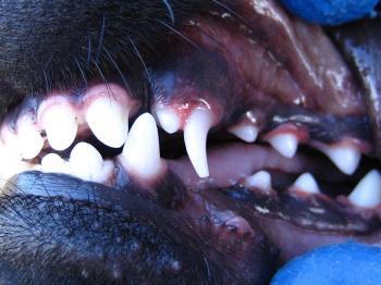 ブログ リラ 歯015