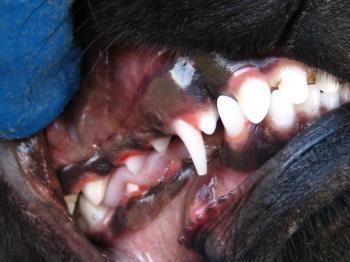 ブログ リラ 歯016
