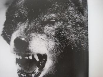 ブログ リラ 巨摩狼001