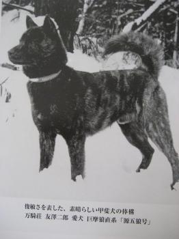 ブログ リラ 源五狼002