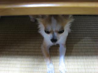テーブルの下に…