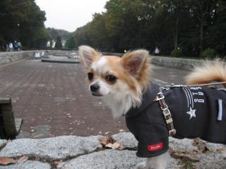 公園でお散歩。