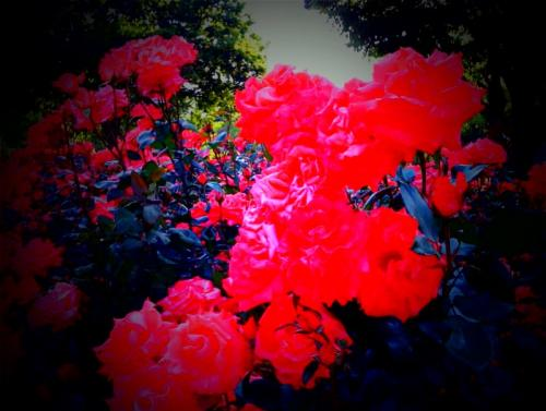 photo-2_convert_20090514214228.jpg