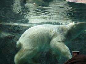 北海道旅行旭川動物園3