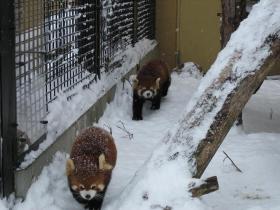 北海道旅行旭川動物園4