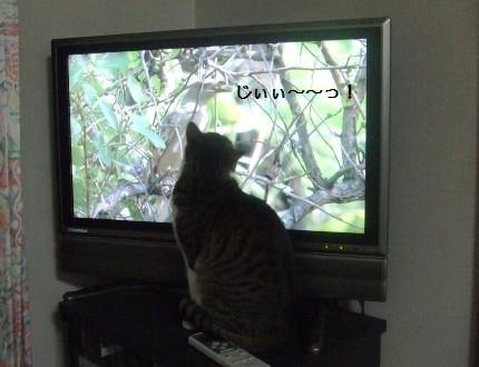 テレビに夢中3