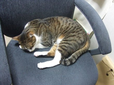 ママの椅子は僕の椅子