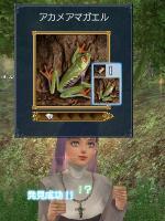 発見◆アカメアマガエル