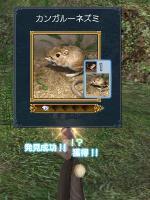 発見◆カンガルーネズミ